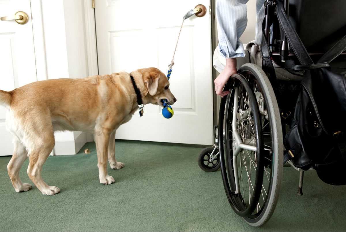 Service dog research paper