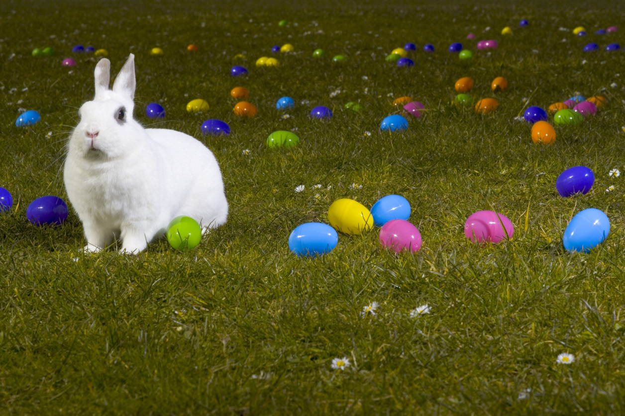 5 numbers to know for easter data mine us news
