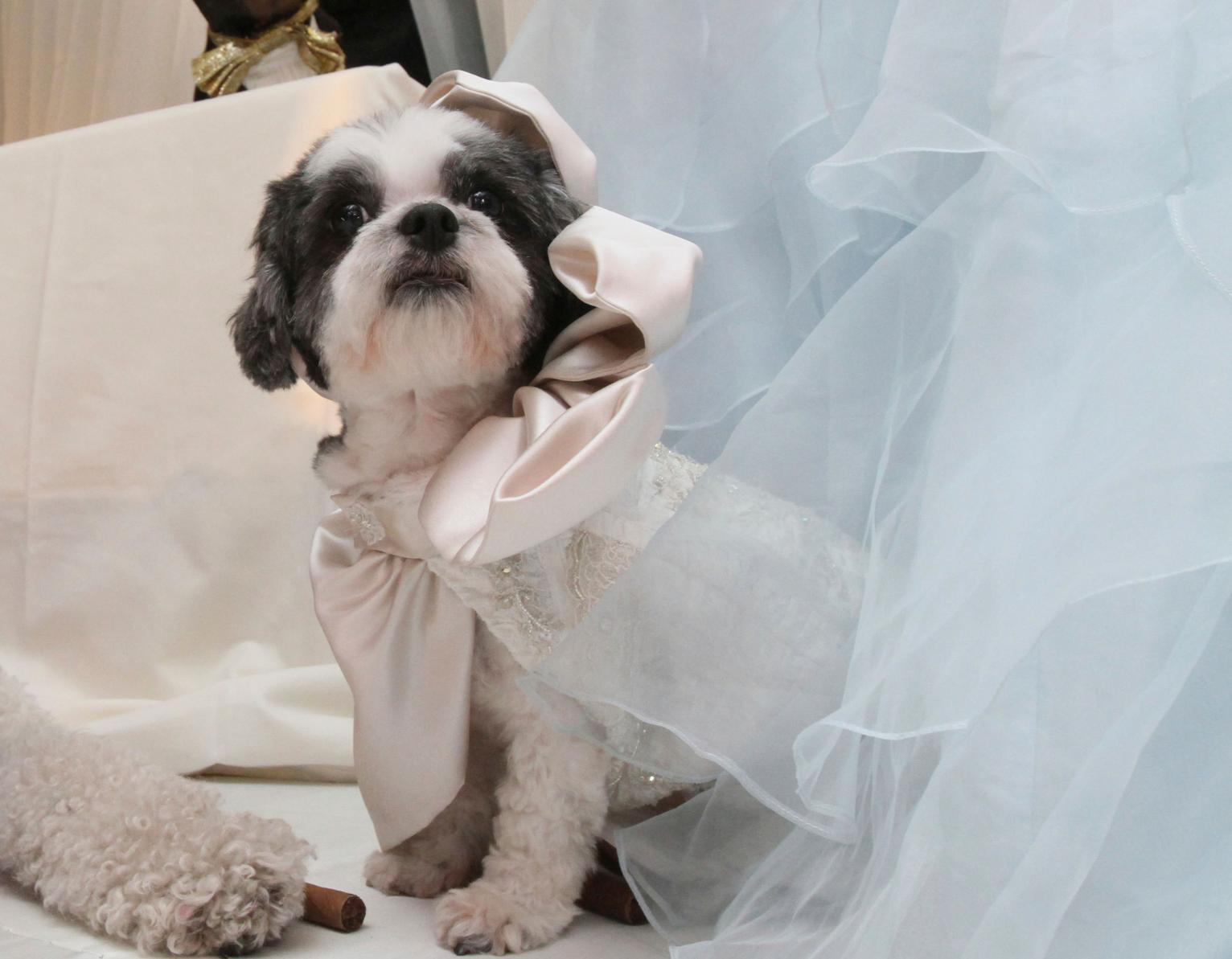 Unusual Dog Wedding Outfits Uk Contemporary - Wedding Dress Ideas ...