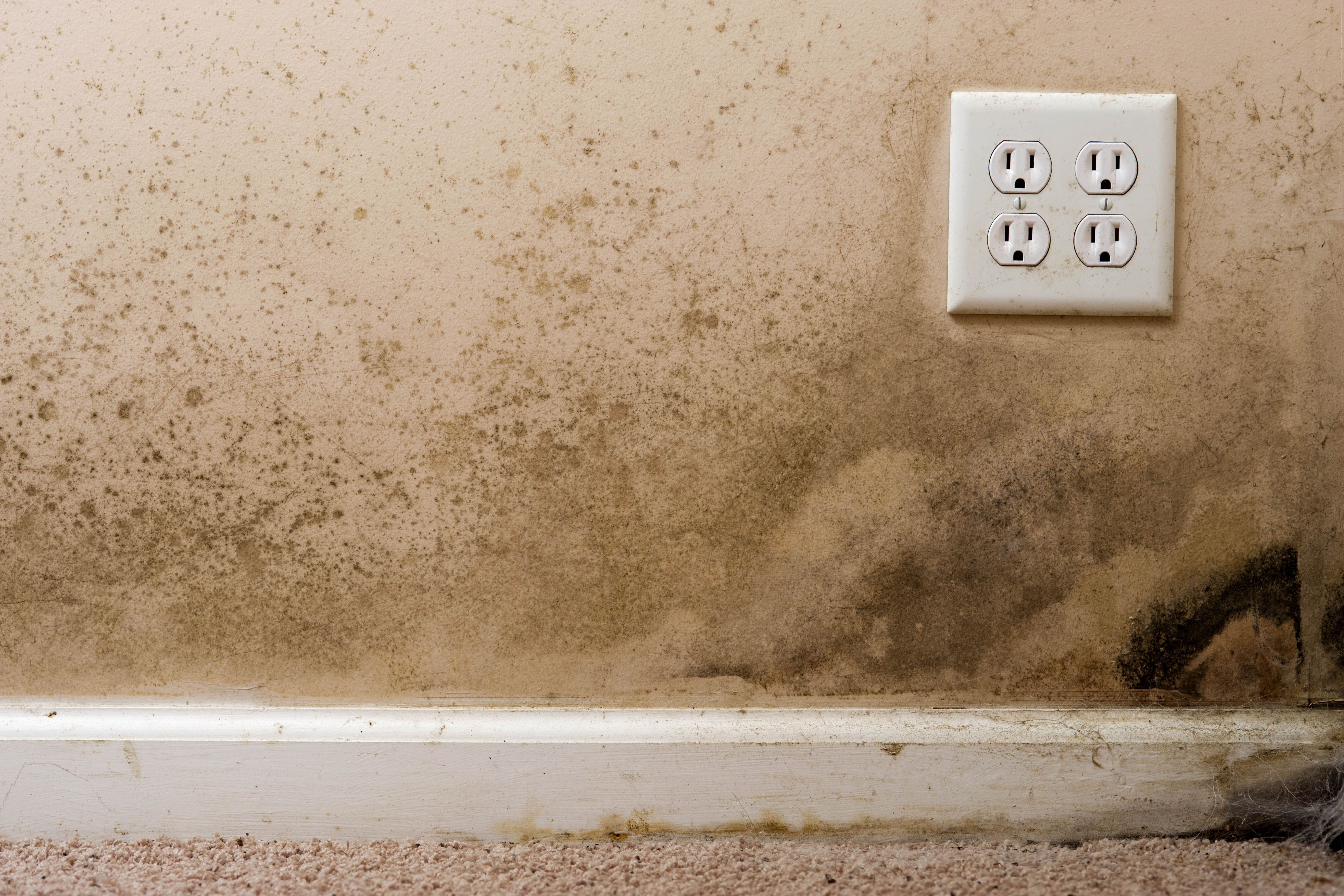 How Mold Affects Your Health And Your Homeu0027s Value | Real Estate | US News.  »