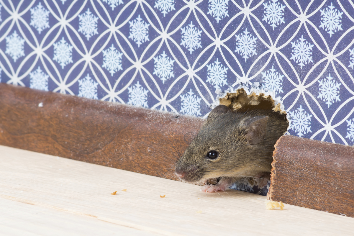what to know before hiring a pest control service personal finance us news. Black Bedroom Furniture Sets. Home Design Ideas