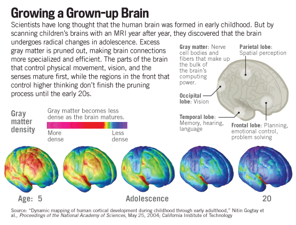 How to Deploy the Amazing Power of the Teen Brain   Family ...