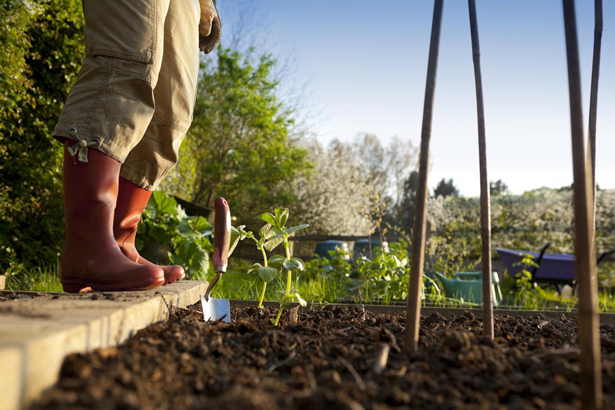 Gardening tips that can save you over 700 spending us news - Practical tips to make money from gardening ...