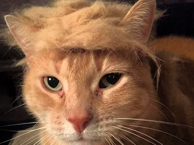150715 editorial these cats look like presidential candidate donald trump