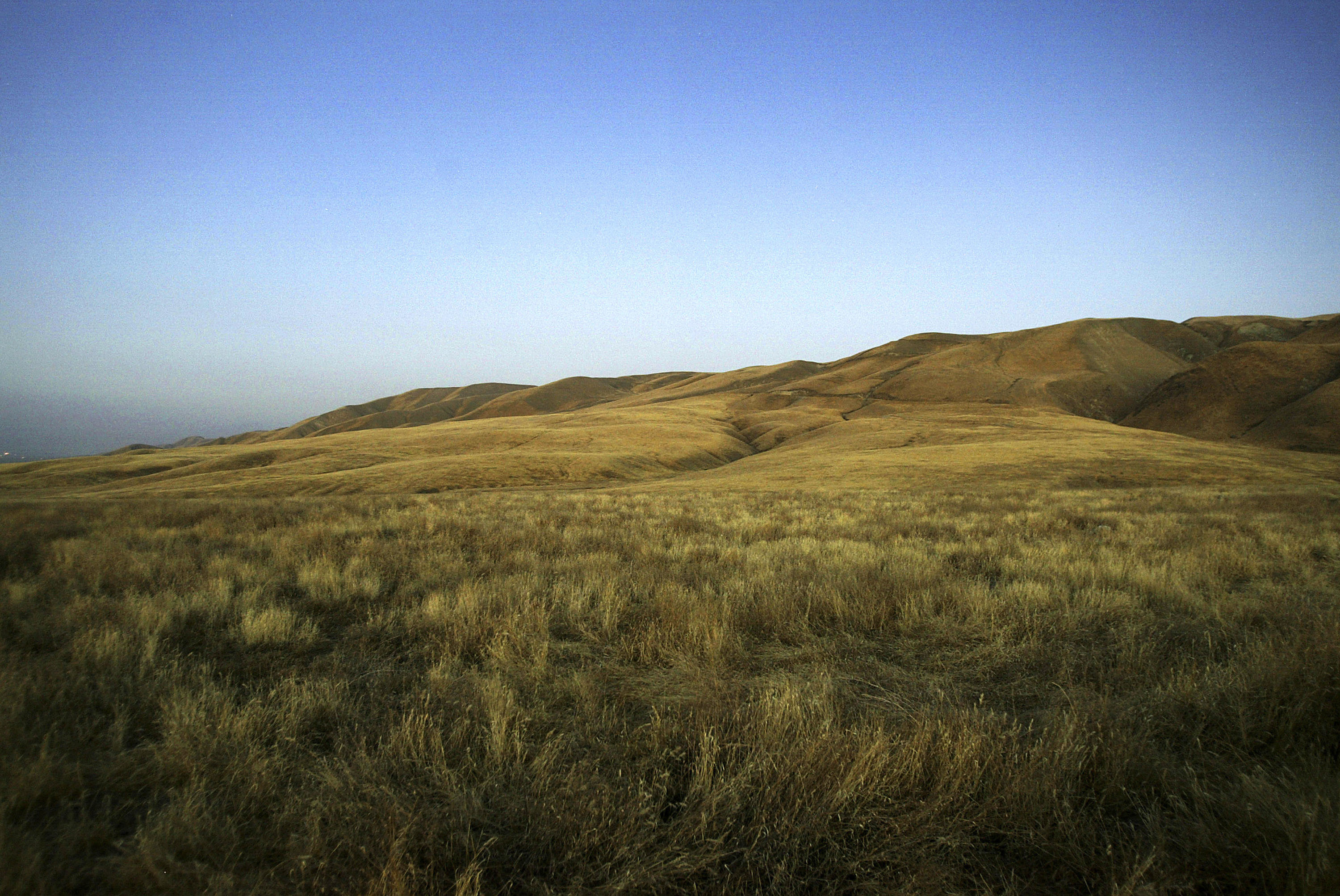 a study of grasslands Grassland research report index by date (annual report)  a study to  determine the impact that defoliation by grazing has on grassland plant species.