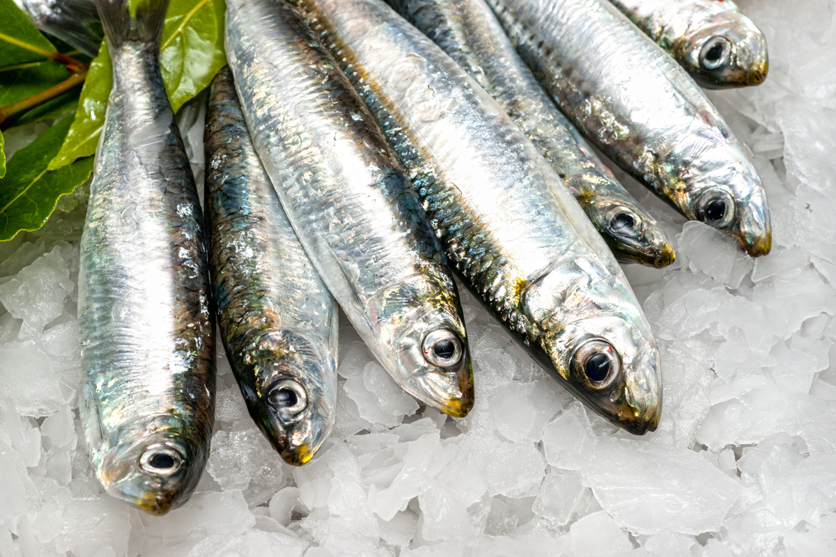 13 best fish high in omega 3s and environment friendly for What fish is good for you