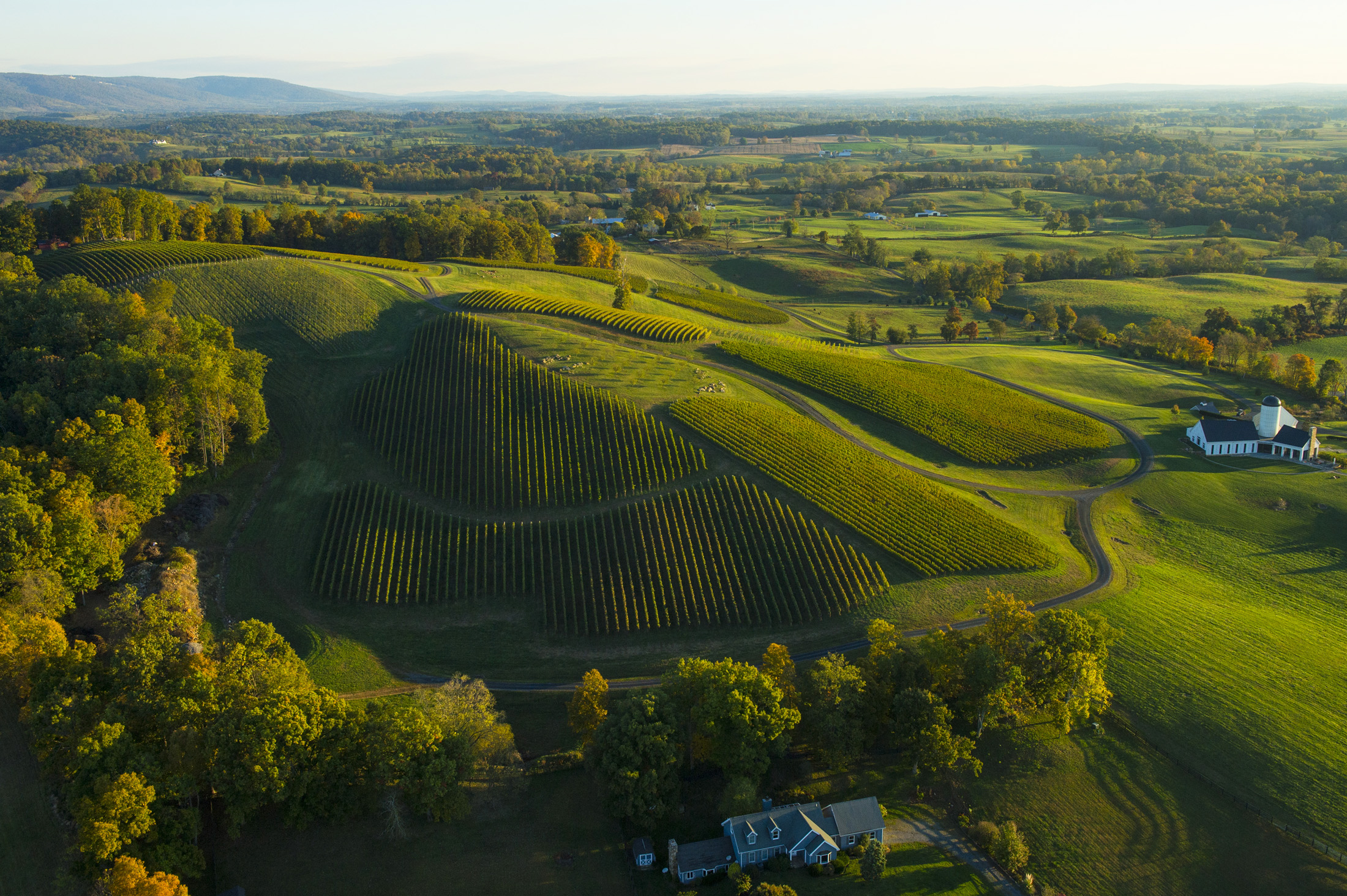 The Best Virginia Wineries for Instagrammers
