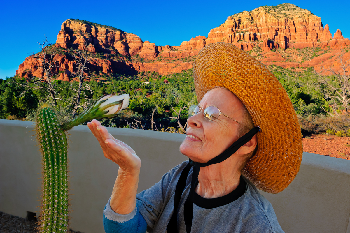 Senior woman looking at Golden torch cactus flower, Arizona, America, USA