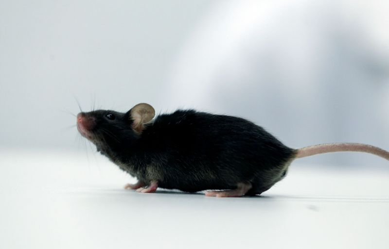 German Scientists Make Paralyzed Mice Walk Again After Just Two Weeks of Gene Therapy